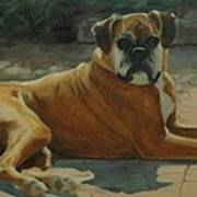 Old Boxer Poster