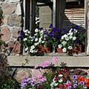 Old Cottage Flowers Poster