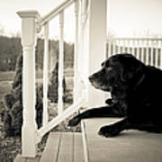 Old Dog On A Front Porch Poster