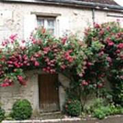 Old House Covered With Roses Poster