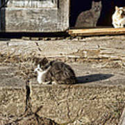 Old Knox Church Cats #2 Poster