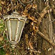 Old Lamp Hanging On Tree  Poster