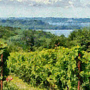 Old Mission Peninsula Vineyard Poster