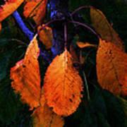Old Orange Leaves Poster