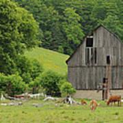 Old Quebec Barn Poster