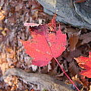 Old Rag Hiking Trail - 121216 Poster