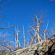 Old Rag Hiking Trail - 121245 Poster