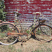 Old Rusty Bicycle With Basket Of Lavender Flowers Poster