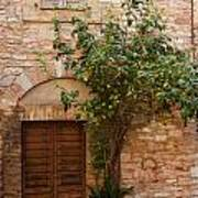 Old Stone House With Plants  Poster