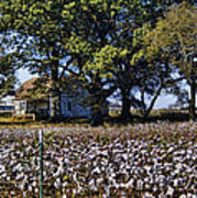Old Time Farm And Cotton Fields Poster