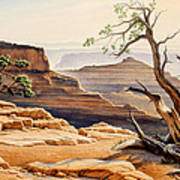 Old Tree At The Canyon Poster