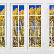 Old Triple16 Pane White Window Colorful Autumn Aspen Forest View Poster