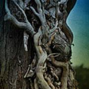 Old Vine Poster