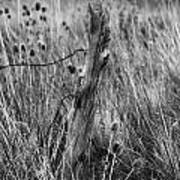 Old Wooden Fence Post In A Field Poster