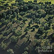 Olive Farmland In Spain Poster