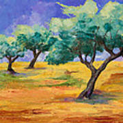 Olive Trees Grove Poster