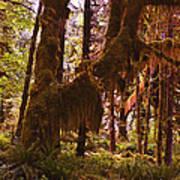 Olympic National Park - Rainforest Poster