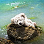 On The Rocks - Teddy Bear Art By William Patrick And Sharon Cummings Poster