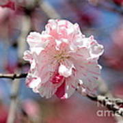 One Pink Blossom Poster by Carol Groenen