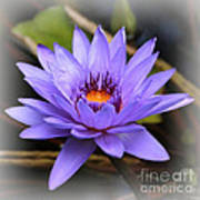 One Purple Water Lily With Vignette Poster