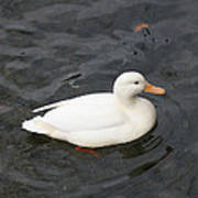 One White Duck Poster