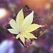 One Yellow Maple Leaf Poster