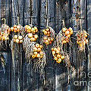 Onions And Barnboard Poster