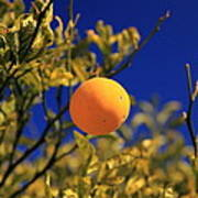 Orange And Blue Sky Poster