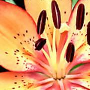 Orange And Pink Flower Poster