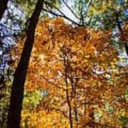 Orange Autumn II Poster
