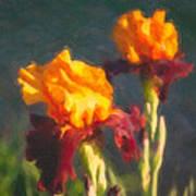 Orange Bearded Irises Poster