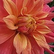 Orange Blossom Special Poster