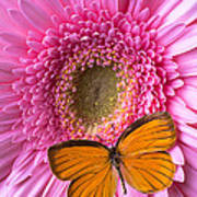 Orange Butterfly On Pink Daisy Poster