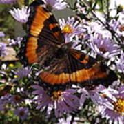 Orange Butterfly/purple Flowers Poster