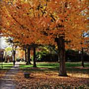 Orange Canopy - Davidson College Poster