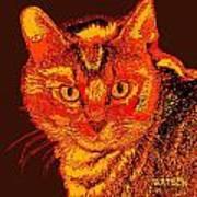 Orange Cat Poster