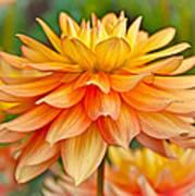 Orange Cream Dahlia Poster