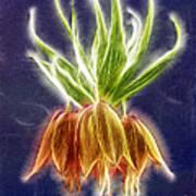 Orange Crown Imperial Flowers Fritillaria Imperialis Poster