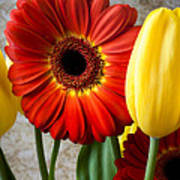 Orange Daisy With Tulips Poster