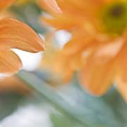 Orange Design. Paintrly Chrysanthemum  Poster
