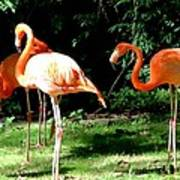 Orange Flamingo Poster