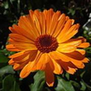 Orange Flower In The Garden Poster