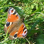 Orange Flutter Poster