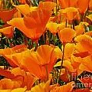 Orange Glimmer Poster