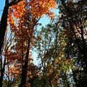 Orange Glowing Tree Poster