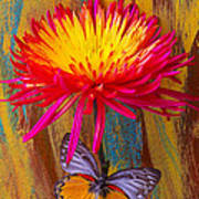 Orange Gray Butterfly On Mum Poster