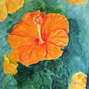 Orange Hibiscus Poster