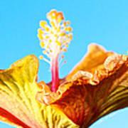 Orange Hibiscus Texture I Poster