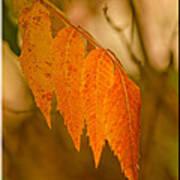 Orange Leaves Of Fall Poster