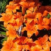 Orange Lilies Poster